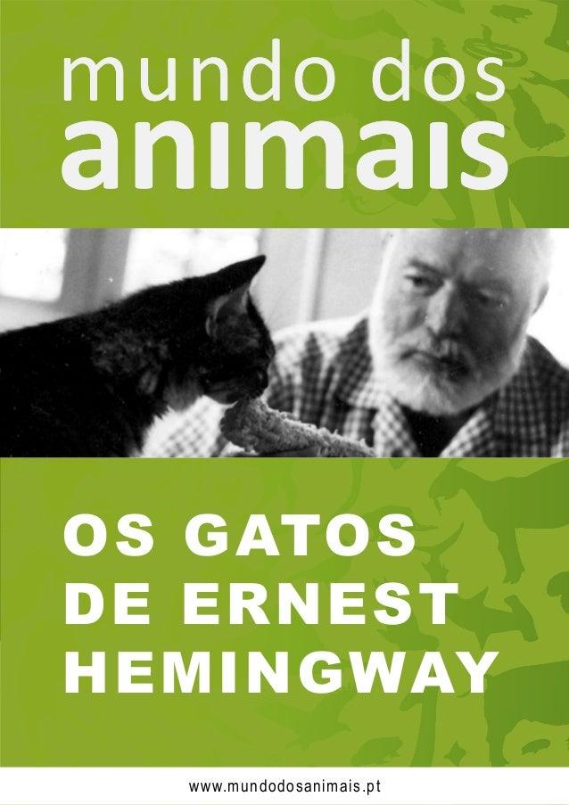 OS GATOS DE ERNEST HEMINGWAY www.mundodosanimais.pt