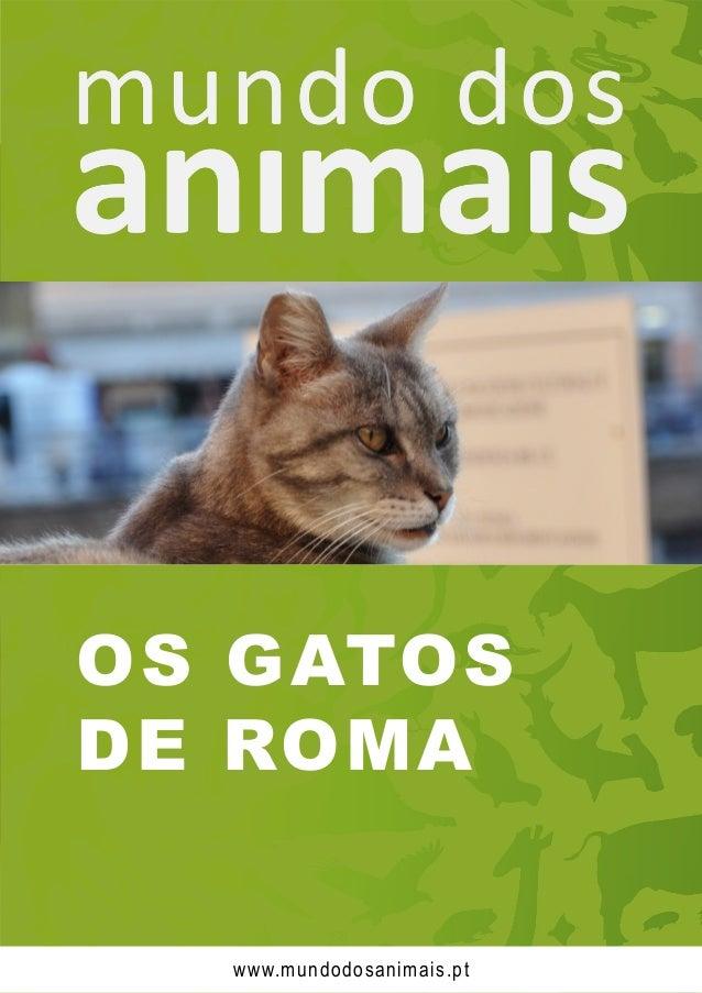 OS GATOS DE ROMA www.mundodosanimais.pt