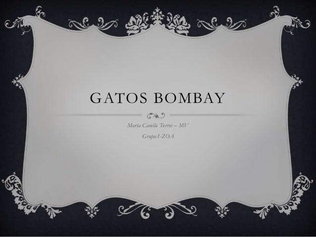 GATOS BOMBAY María Camila Torres – MV Grupo:1-ZOA