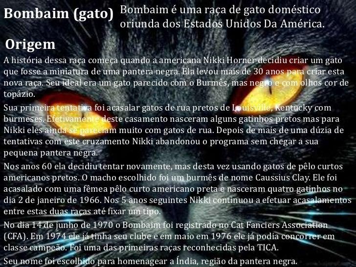 Resultado de imagem para Bombaim(gato)