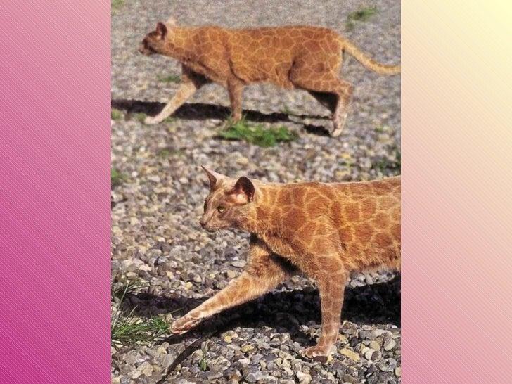 Gatos pintados Slide 10