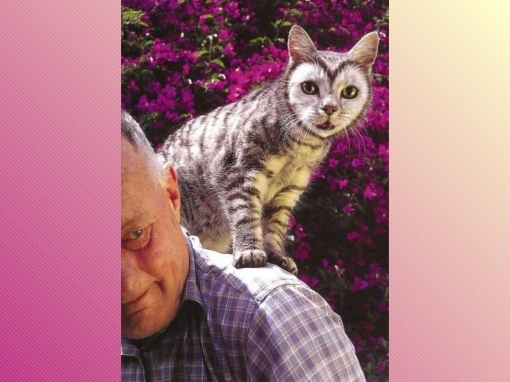 Gatos pintados Slide 12