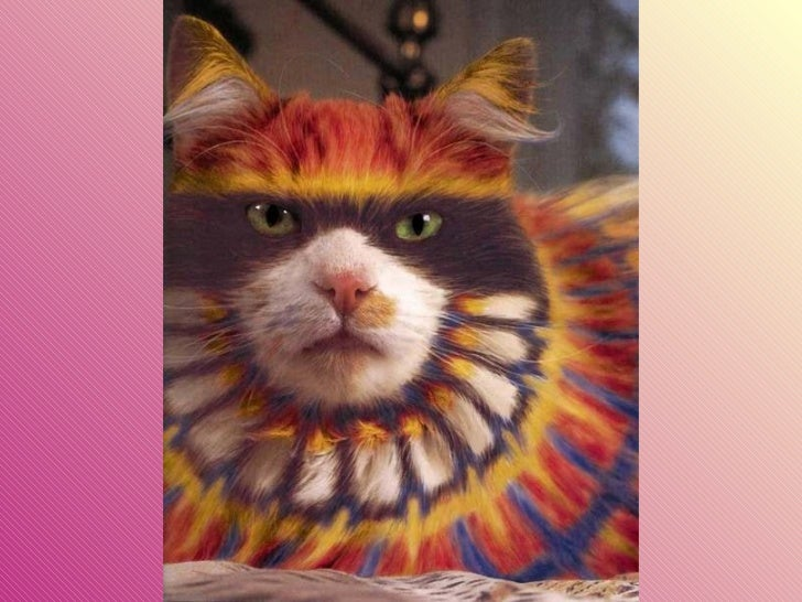 Gatos pintados Slide 17