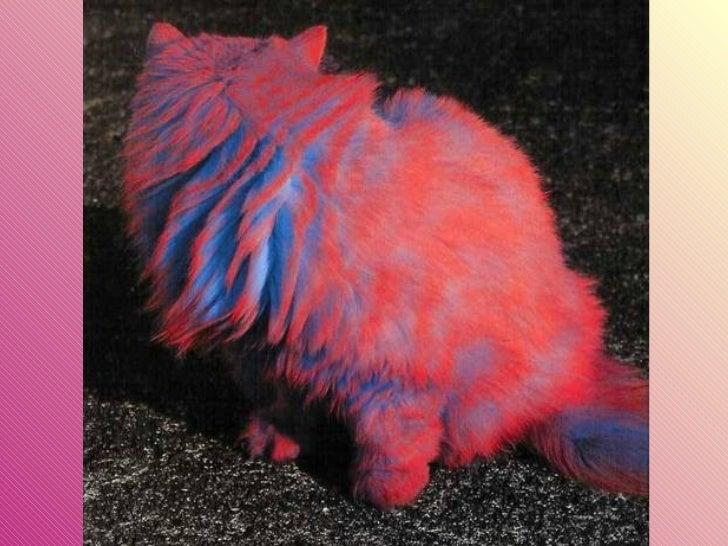 Gatos pintados Slide 18