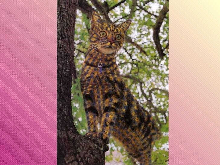 Gatos pintados Slide 22