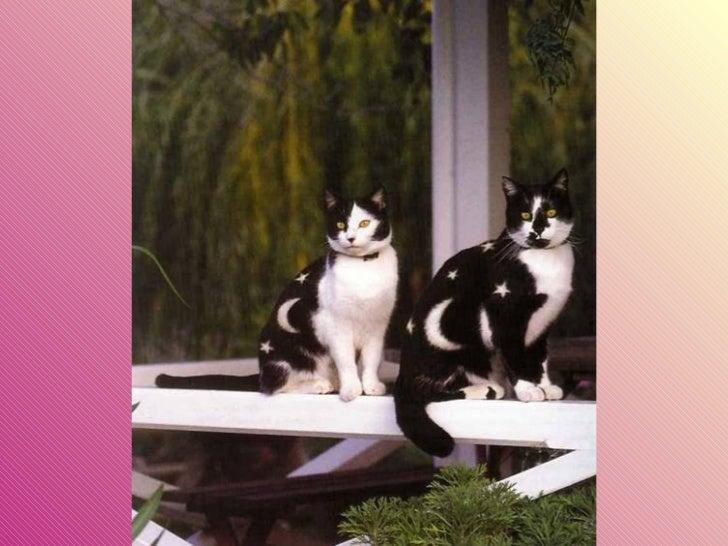 Gatos pintados Slide 23