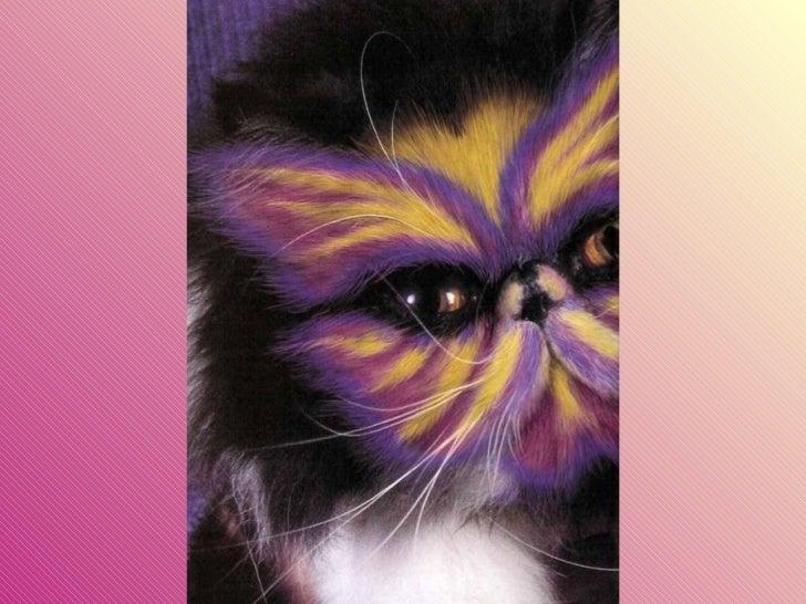 Gatos pintados Slide 6