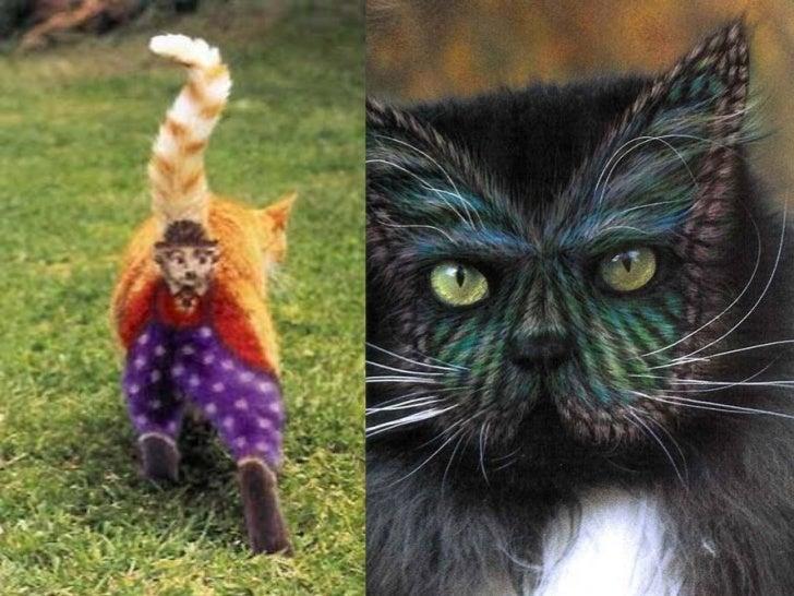Gatos pintados Slide 7