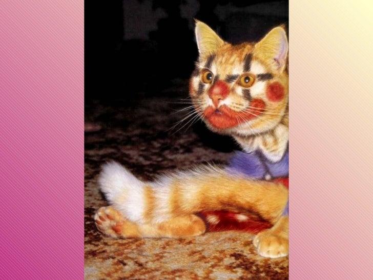 Gatos pintados Slide 8
