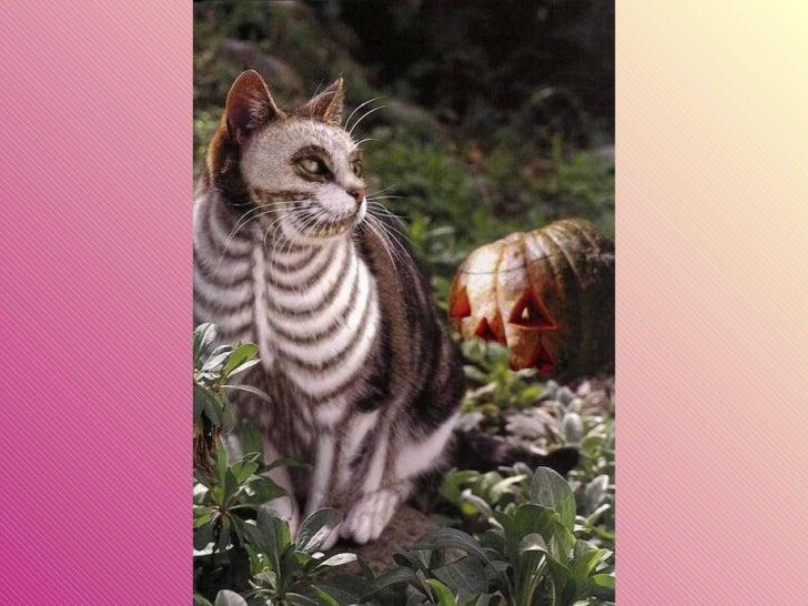Gatos pintados Slide 9