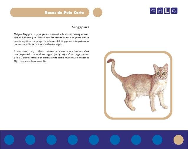 Enciclopedia del gato