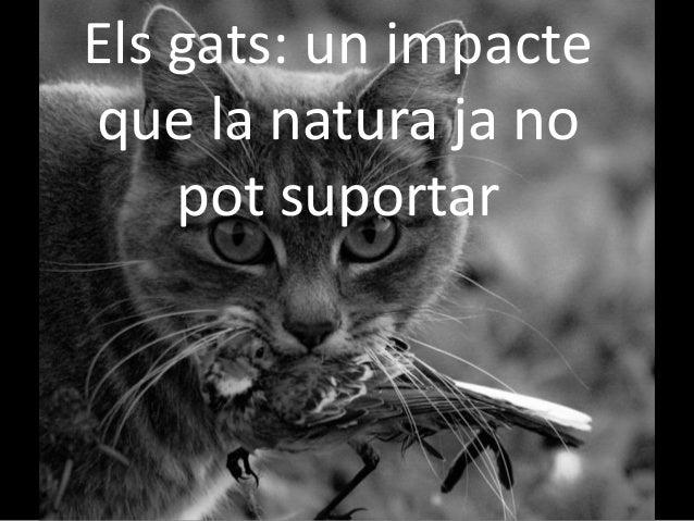 Els gats: un impacte que la natura ja no pot suportar