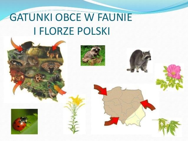 GATUNKI OBCE W FAUNIE I FLORZE POLSKI