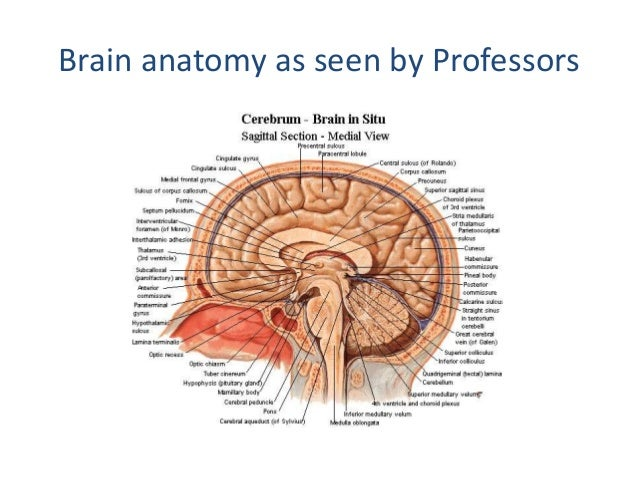 How To Read A Head Ct Ct Brain