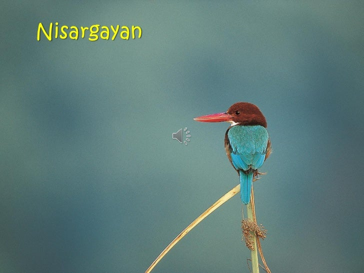 Nisargayan