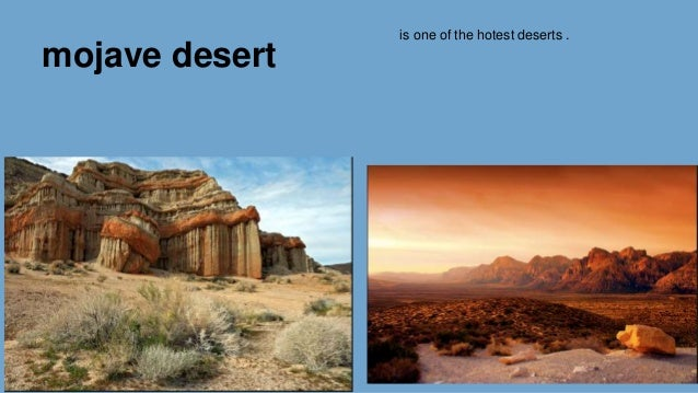 biome desert and food chain essay Because food and water are hard to find, desert animals live in ways that require  very little energy and waste little water for example, snakes, scorpions, and.