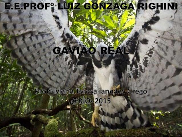 Objetivos: Entender as principais características e o comportamento do Gavião real.