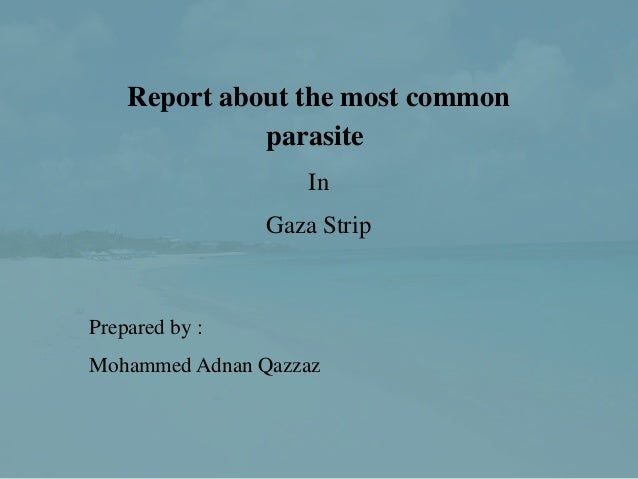 Report about the most common              parasite                    In                Gaza StripPrepared by :Mohammed Ad...
