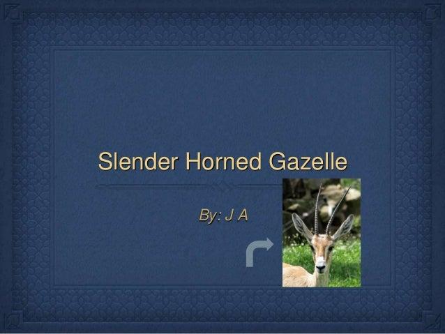 Slender Horned Gazelle By: J A