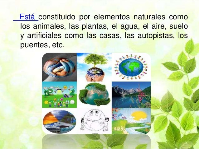 El medio ambiente - Ambientadores naturales para la casa ...