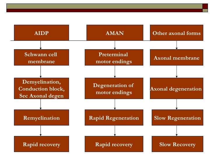 AIDP AMAN Other axonal forms Schwann cell  membrane Preterminal  motor endings Axonal membrane Demyelination, Conduction b...