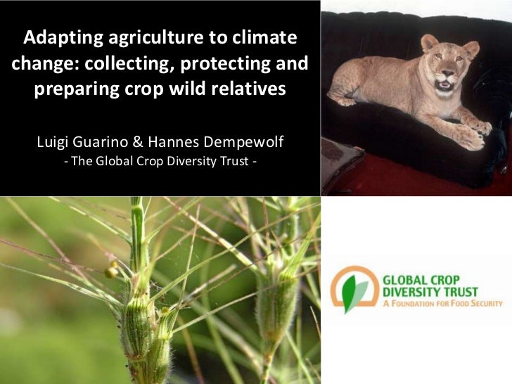Adapting agriculture to climatechange: collecting, protecting and  preparing crop wild relatives  Luigi Guarino & Hannes D...