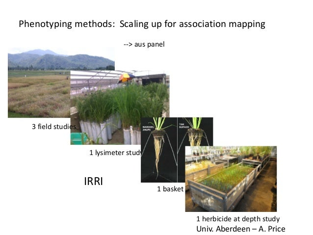 Phenotyping methods: Scaling up for association mapping --> aus panel 3 field studies 1 lysimeter study 1 basket study 1 h...
