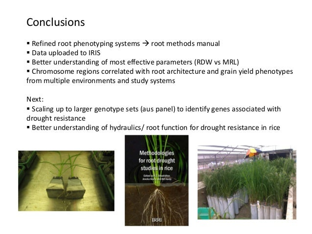 Conclusions  Refined root phenotyping systems  root methods manual  Data uploaded to IRIS  Better understanding of mos...