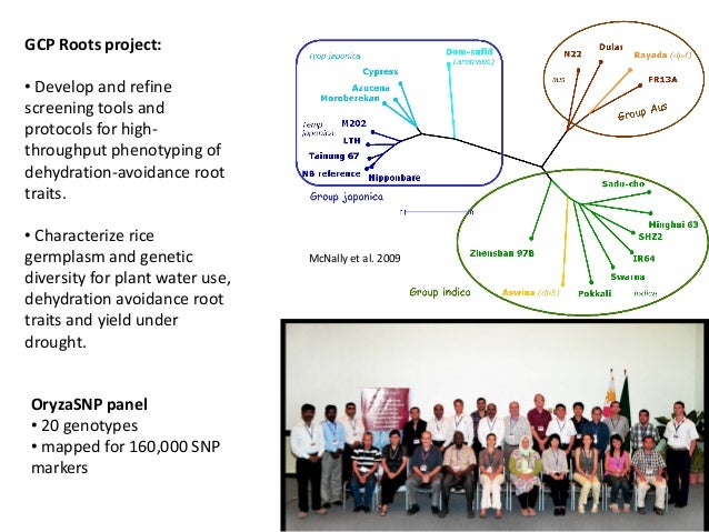 OryzaSNP panel • 20 genotypes • mapped for 160,000 SNP markers GCP Roots project: • Develop and refine screening tools and...