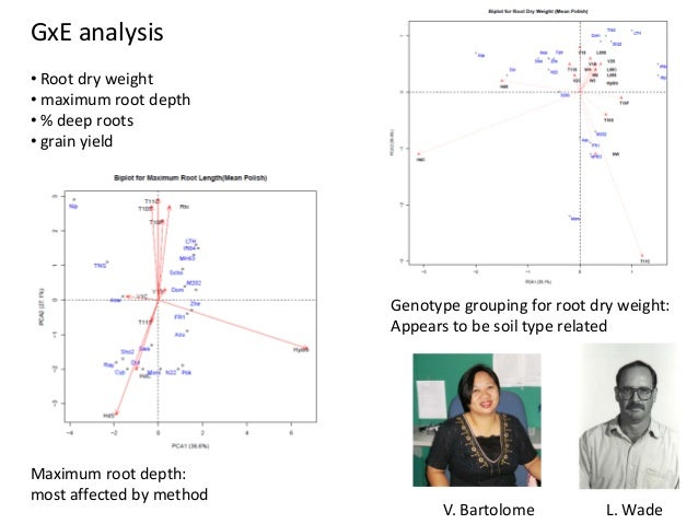 GxE analysis • Root dry weight • maximum root depth • % deep roots • grain yield Genotype grouping for root dry weight: Ap...