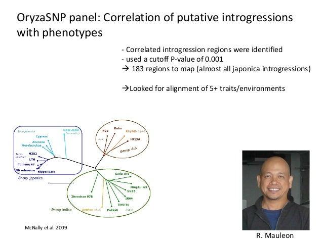 OryzaSNP panel: Correlation of putative introgressions with phenotypes - Correlated introgression regions were identified ...