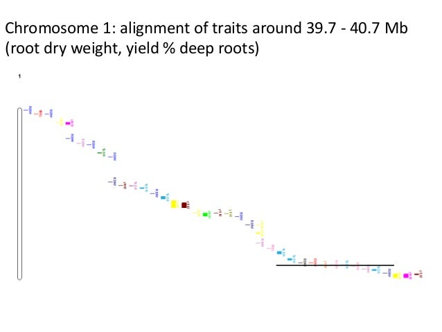 Chromosome 1: alignment of traits around 39.7 - 40.7 Mb (root dry weight, yield % deep roots)
