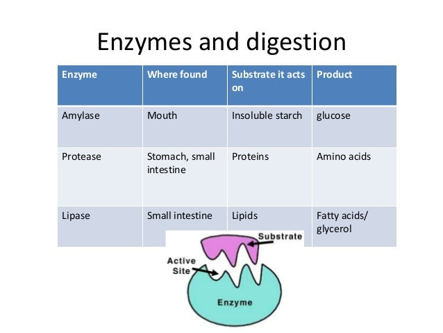 digestion summary igcse level essay Igcse edexcel biology includes lesson  igcse edexcel enzymes and  digestion resources  digestive-system-modelppt digestion-enzymes-essay doc close  a level biology - edexcel ,salters nuffield topic 3 revision  notes.