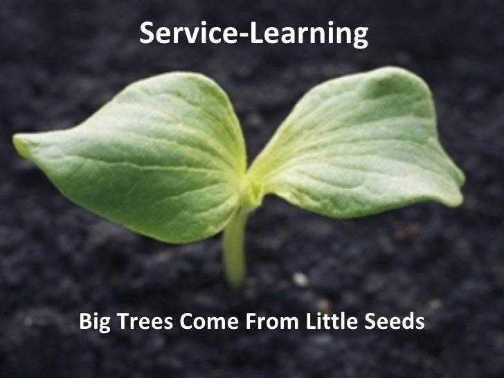 Service-Learning Big Trees Come From Little Seeds