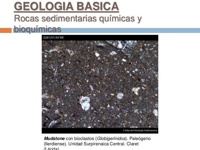 Mudstone con bioclastos (Globigerínidos). Paleógeno (Ilerdiense). Unidad Surpirenaica Central. Claret GEOLOGIA BASICA Roca...
