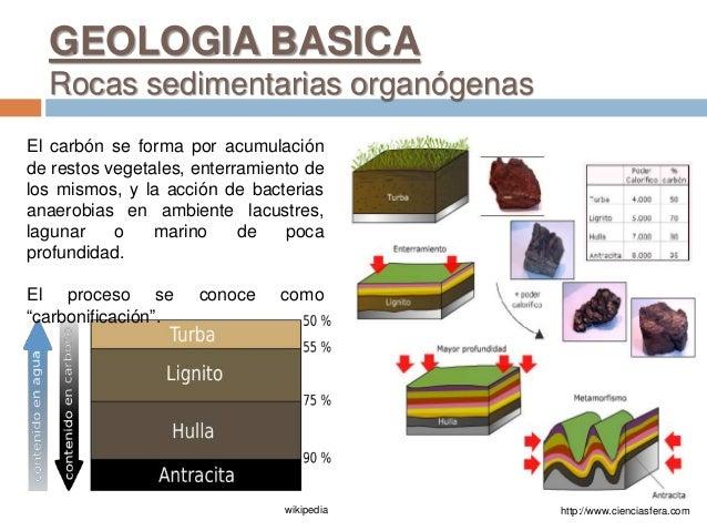 GEOLOGIA BASICA Rocas sedimentarias organógenas http://www.cienciasfera.comwikipedia El carbón se forma por acumulación de...
