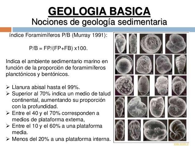 GEOLOGIA BASICA Nociones de geología sedimentaria índice Foramimíferos P/B (Murray 1991): P/B = FP/(FP+FB) x100. Indica el...