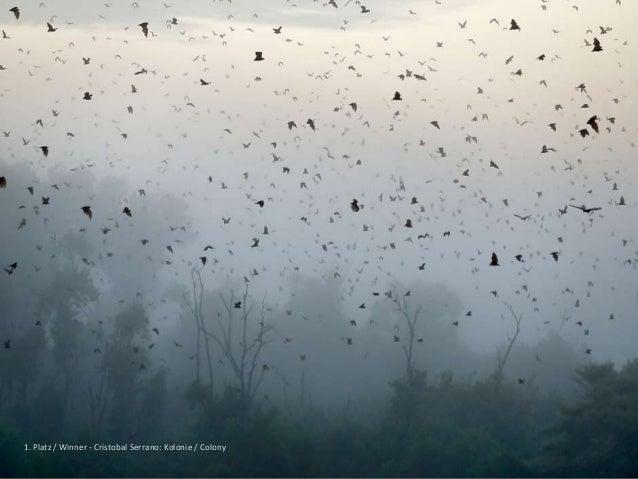GDT European Wildlife Photographer of the Year 2014 Slide 3