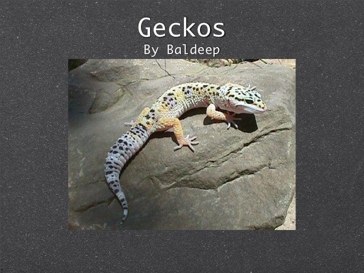 Geckos By Baldeep