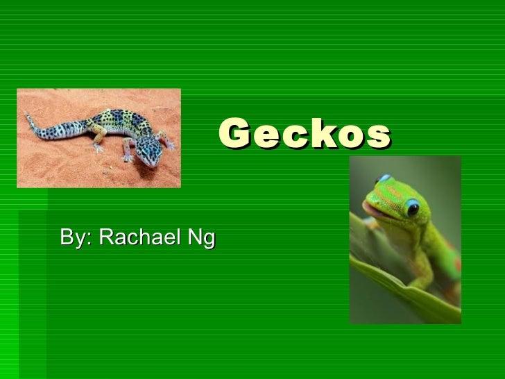 Geckos By: Rachael Ng