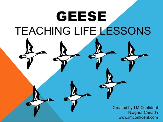 GEESE  TEACHING LIFE LESSONS  Created by I M Confident  Niagara Canada  www.imconfident.com