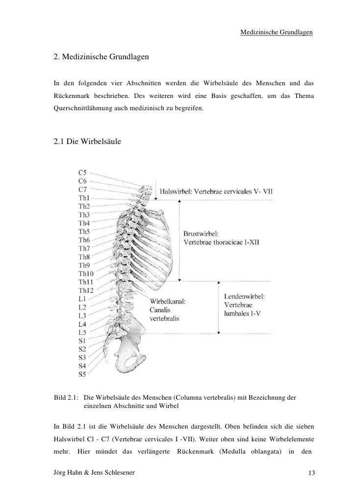 Tolle C7 Wirbelsäule Zeitgenössisch - Menschliche Anatomie Bilder ...