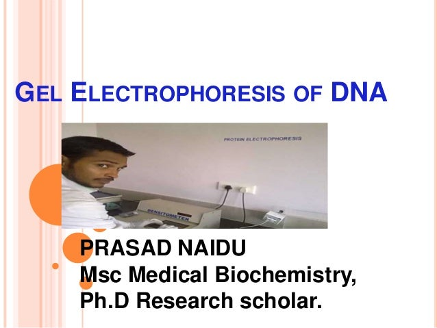 GEL ELECTROPHORESIS OF DNA PRASAD NAIDU Msc Medical Biochemistry, Ph.D Research scholar.