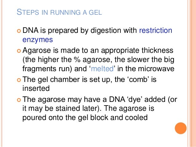 restriction enzymes gel electrophoresis
