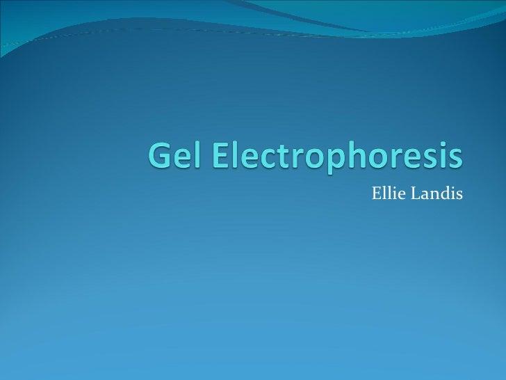 gel electrophoresis power point