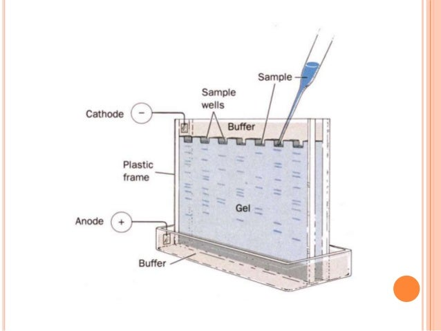 Gel electroporosis