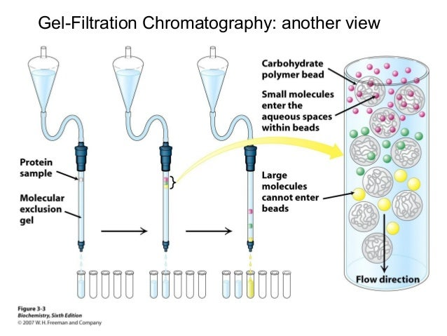 lab report on chromatography Chromatography lab report biology 1 ib biology hl lab report separation of photosynthetic pigments using plant chromatography shantal al habib 17 may.