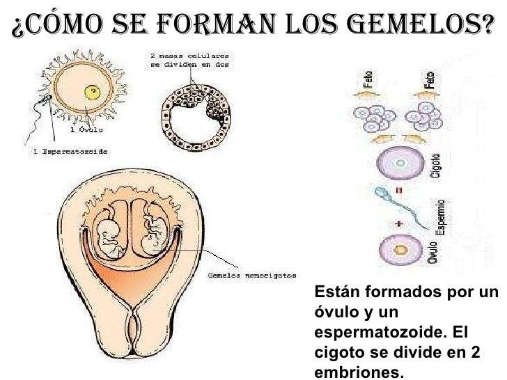 Gemelos 1 for Como se forma el marmol