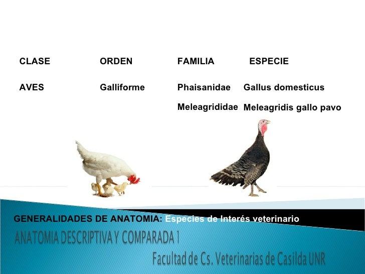 Gen anatomía