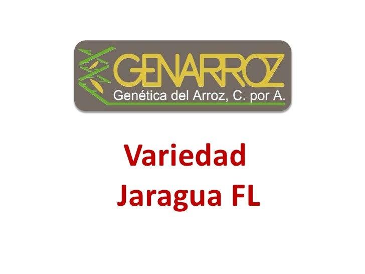 Variedad<br />Jaragua FL<br />